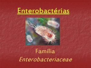 Enterobactrias Famlia Enterobacteriaceae Enterobactrias Bacilos Gramnegativos fermentadores de