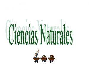 Tema Clasificacin de las plantas PLANTAS SIN FLORES