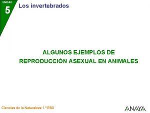 UNIDAD 5 Los invertebrados ALGUNOS EJEMPLOS DE REPRODUCCIN