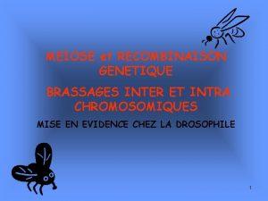 MEIOSE et RECOMBINAISON GENETIQUE BRASSAGES INTER ET INTRA