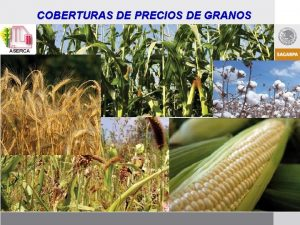COBERTURAS DE PRECIOS DE GRANOS Introduccin El proceso