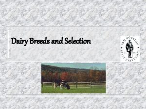 Dairy Breeds and Selection Objectives n Major Breeds