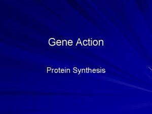 Gene Action Protein Synthesis Overview of Protein Synthesis