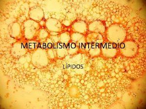 METABOLISMO INTERMEDIO LPIDOS Luego de la absorcin de