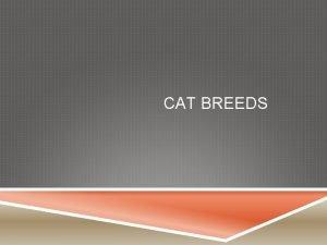 CAT BREEDS ABYSSINIAN Balanced medium sized animal of