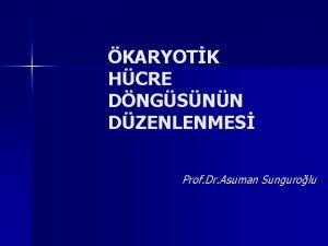 KARYOTK HCRE DNGSNN DZENLENMES Prof Dr Asuman Sungurolu