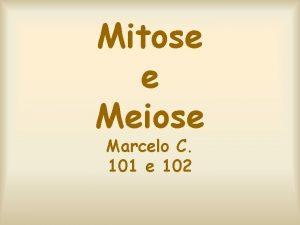 Mitose e Meiose Marcelo C 101 e 102