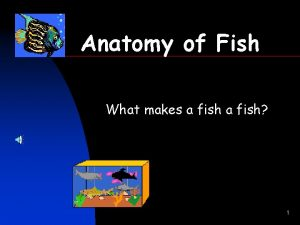 Anatomy of Fish What makes a fish 1