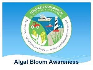 Algal Bloom Awareness What is an Algal algae