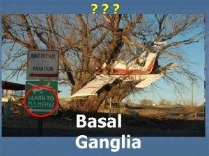 Basal Ganglia Basal Ganglia Subcortical Masses of gray