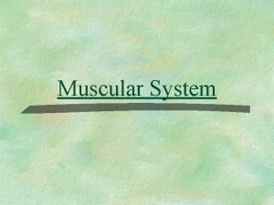 Muscular System The Muscular System Muscles are responsible