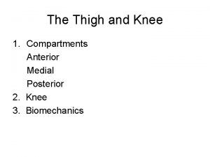 The Thigh and Knee 1 Compartments Anterior Medial