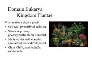 Domain Eukarya Kingdom Plantae What makes a plant