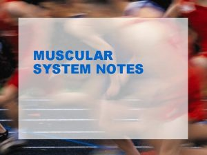 MUSCULAR SYSTEM NOTES MUSCULAR SYSTEM Muscles are responsible