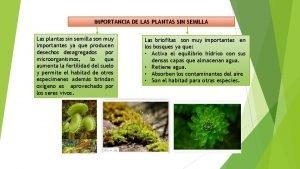 IMPORTANCIA DE LAS PLANTAS SIN SEMILLA Las plantas