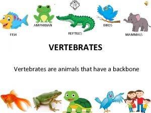 AMPHIBIAN FISH BIRDS REPTILES MAMMALS VERTEBRATES Vertebrates are