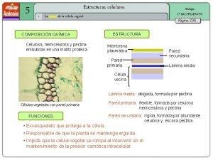 5 Estructuras celulares 1 La pared de la
