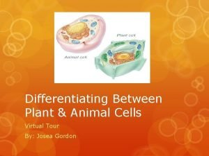 Differentiating Between Plant Animal Cells Virtual Tour By