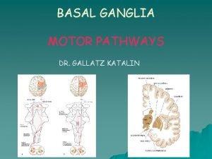 BASAL GANGLIA MOTOR PATHWAYS DR GALLATZ KATALIN Basal