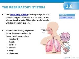 THE RESPIRATORY SYSTEM The respiratory system is the
