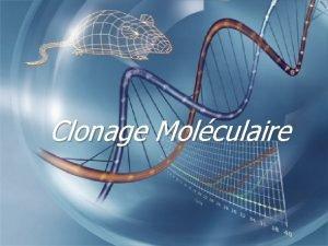 Clonage Molculaire Dfinitions q Clonage r Obtenir un
