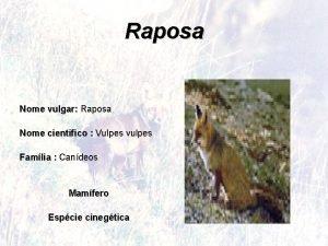 Raposa Nome vulgar Raposa Nome cientifico Vulpes vulpes