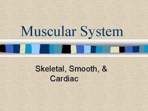 Muscular System Skeletal Smooth Cardiac n Our body