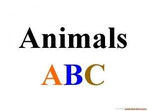 Animals ABC Courtesy kidsandparenting com A Courtesy kidsandparenting