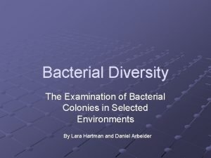 Bacterial Diversity The Examination of Bacterial Colonies in
