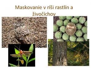 Maskovanie v ri rastln a ivochov Maskovanietypy kamufle