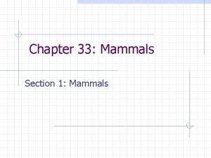 Chapter 33 Mammals Section 1 Mammals Mammals Includes