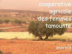 cooprative agricole des femmes tamounte imintlit la pancarte