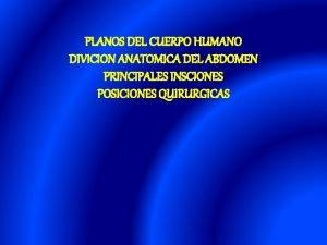 PLANOS DEL CUERPO HUMANO DIVICION ANATOMICA DEL ABDOMEN