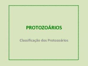 PROTOZORIOS Classificao dos Protozorios Protozorios Unicelulares Eucariontes Possuem