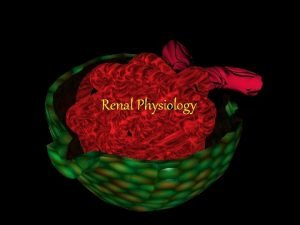 Renal Physiology Renal Physiology Lecture Outline General Functions