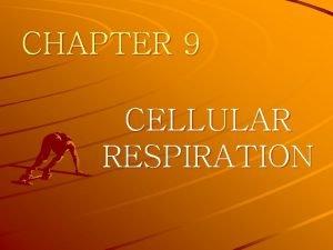CHAPTER 9 CELLULAR RESPIRATION CHAPTER 9 CELLULAR RESPIRATION