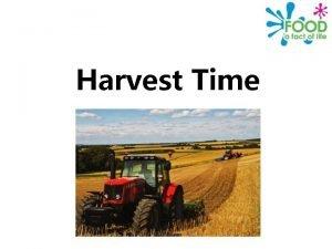 Harvest Time Why is harvest celebrated Harvest Festival
