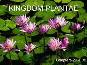 KINGDOM PLANTAE Chapters 29 30 Kingdom PLANTAE Characteristics