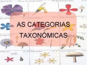 AS CATEGORIAS TAXONMICAS AS CATEGORIAS TAXONMICAS Pai da