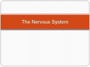 The Nervous System The Central Nervous System The