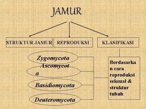 JAMUR STRUKTUR JAMUR REPRODUKSI Zygomycota Ascomycot a Basidiomycota