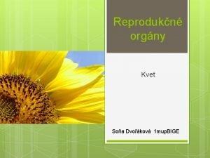 Reprodukn orgny Kvet Soa Dvokov 1 mup BIGE