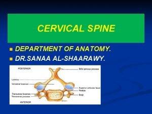 CERVICAL SPINE n n DEPARTMENT OF ANATOMY DR