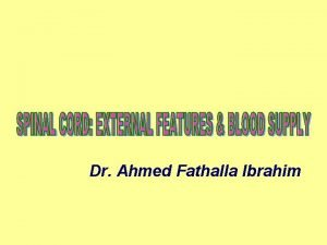 Dr Ahmed Fathalla Ibrahim NERVOUS SYSTEM STRUCTURAL CLASSIFICATION