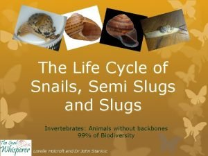 The Life Cycle of Snails Semi Slugs and