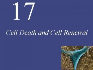 17 Cell Death and Cell Renewal 17 Cell
