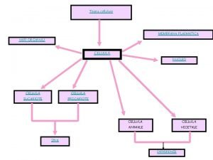 Teoria cellulare MEMBRANA PLASMATICA VARI ORGANULI CELLULA EUCARIOTE