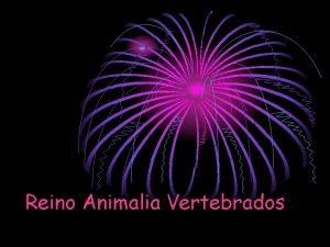 Reino Animalia Vertebrados Z Reino animal es la