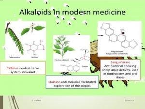 1 Chem465 11282020 2 Tadeusz Aniszewski Chem465 ALKALOIDS