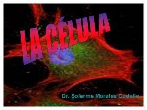 Dr Solerme Morales Cudello Dr Solerme Morales Cudello